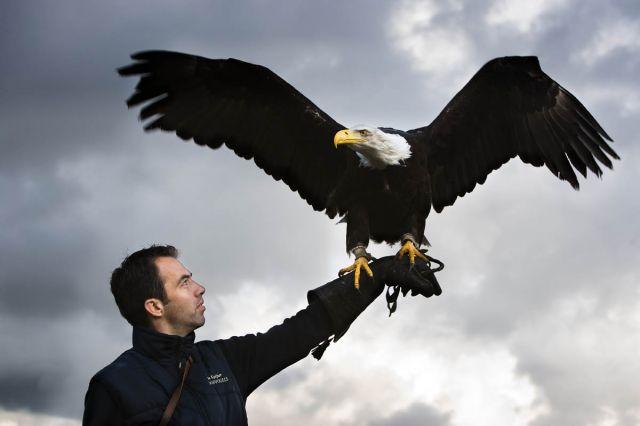 Zeearend met GoPro (Drone-Flight.com)